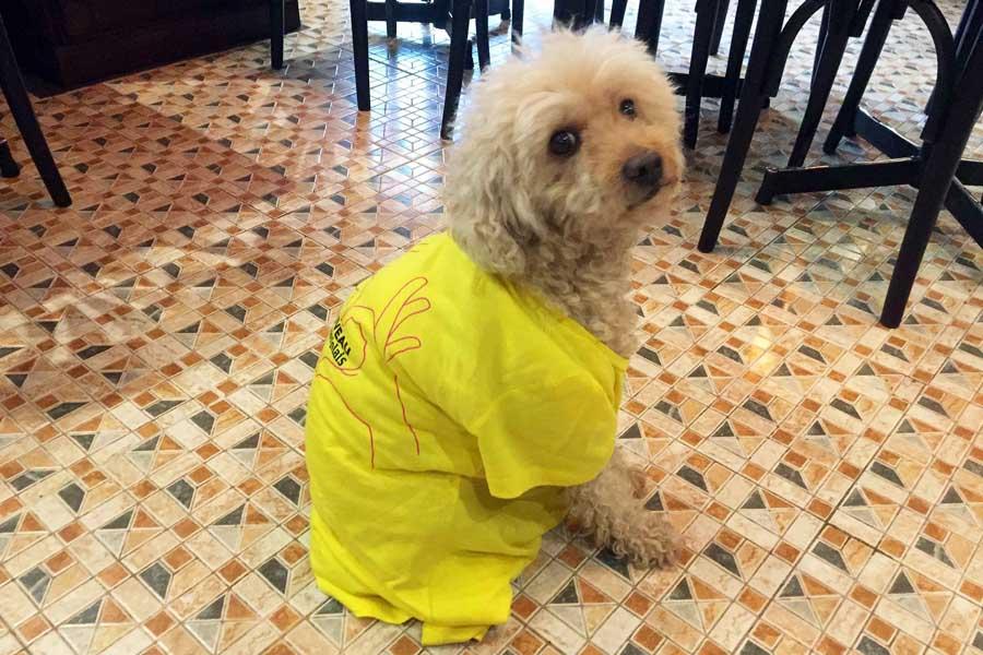 Ben le chien fete beaujolais nouveau
